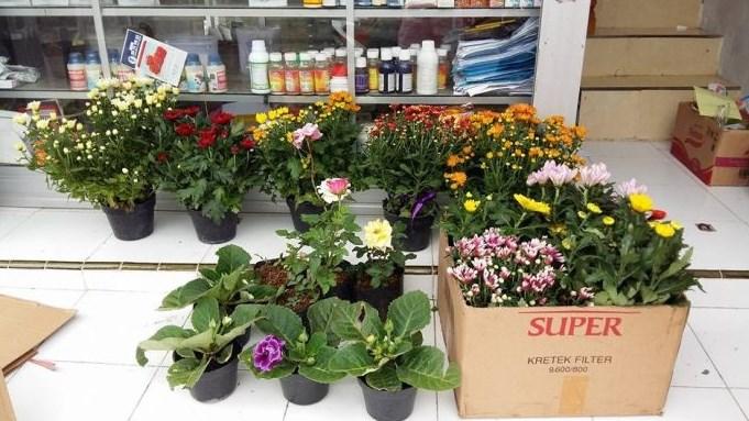 Lengkapi Kebutuhan Berkebun Anda dengan Pelangi Flora