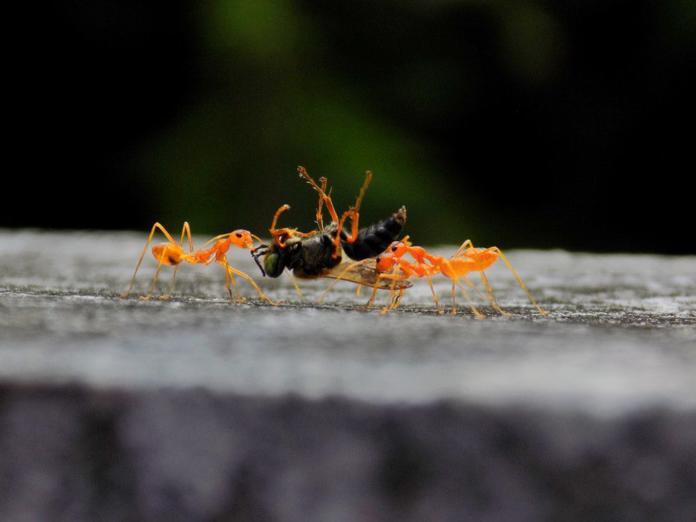 Bingung Bangun Tim Kompak? Belajar dari semut saja