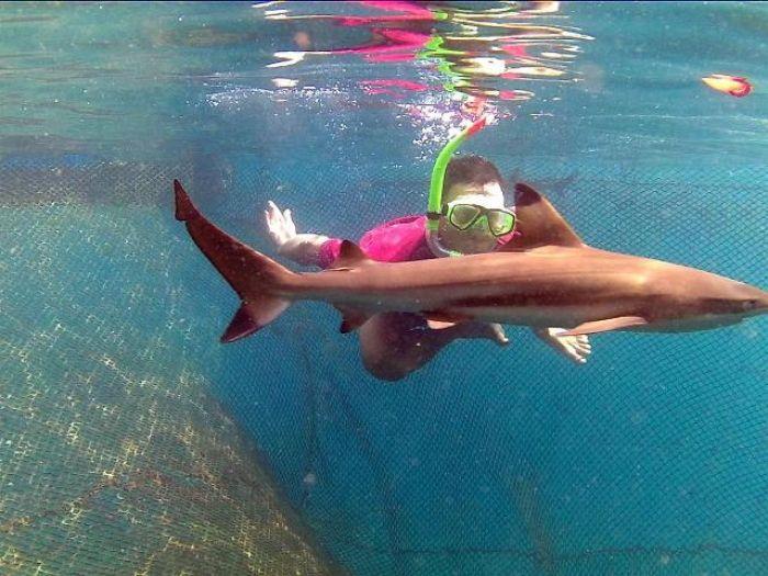 Berenang dengan Hiu di Pantai Bangsring Banyuwangi
